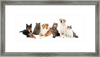 Group Of Cats And Dogs Framed Print by Susan  Schmitz