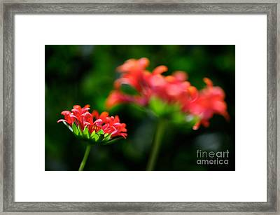 Growing Up Framed Print by Lois Bryan