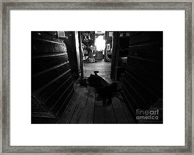 Guard Dog Framed Print by David Lee Thompson
