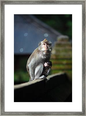 Guardian Mother 2 Framed Print by Mike Reid