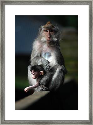 Guardian Mother Framed Print by Mike Reid