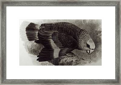 Guilding's Amazon Parrot,  Framed Print by English School
