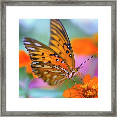 Gulf Fliterary Butterfly Framed Print by Joel Olives Photography