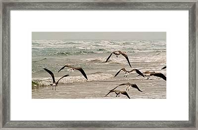 Gulf Gulls Framed Print by Michael Flood