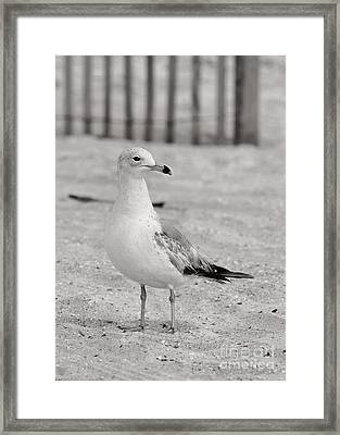 Land Sea And Sky Series Gull Framed Print by Angela Rath