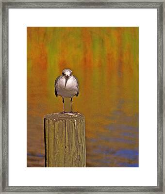 Gull On Post Framed Print by Michael Peychich