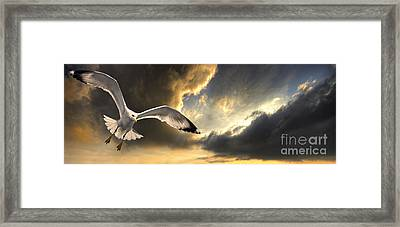 Gull With Approaching Storm Framed Print by Meirion Matthias