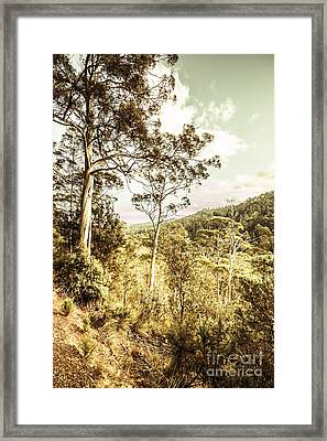 Gumtree Bushland Framed Print by Jorgo Photography - Wall Art Gallery