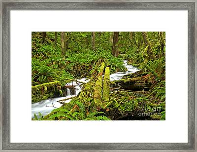 Gushing Through Ferns And Forest Framed Print by Adam Jewell