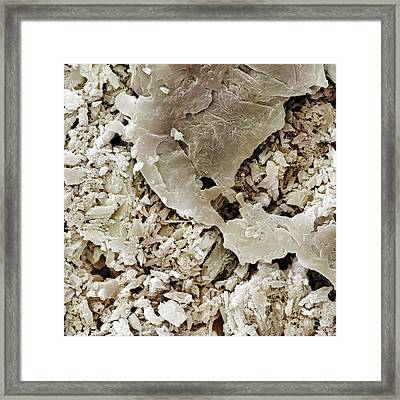 Gypsum Crystals Sem Framed Print by Power and Syred