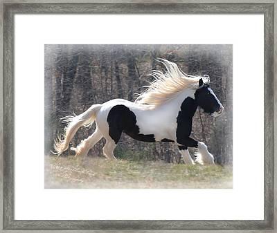 Gypsy Stallion Esperanzo Framed Print by Terry Kirkland Cook