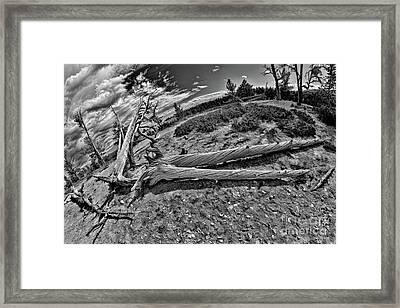 Hafe A Man Tree Framed Print by Blake Richards
