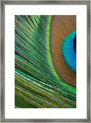 Half Cocked Framed Print by Lisa Knechtel