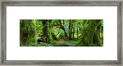 Hall Of Mosses - Craigbill.com - Open Edition Framed Print by Craig Bill