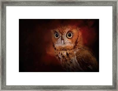 Halloween Owl Framed Print by Jai Johnson