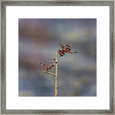 Halloween Pennant Dragonfly Framed Print by Susan Rissi Tregoning