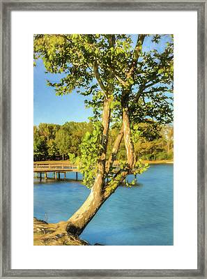 Hanging On - Lakeside Landscape Framed Print by Barry Jones