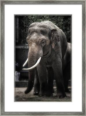 Hanging Out Framed Print by Joan Carroll