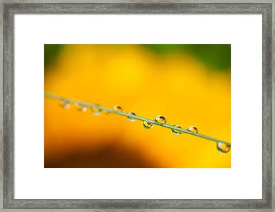 Happy Summer  Framed Print by Sue OConnor