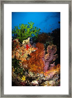 Hard Coral And Soft Coral Seascape Framed Print by Todd Winner