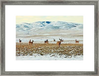Harem Framed Print by Todd Klassy