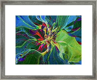 Harlequin Poinsettia Framed Print by RC DeWinter
