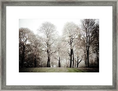 Harmony Framed Print by Maggie Terlecki