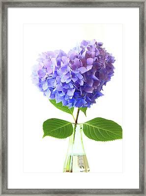Hart Shape Hydrangea Framed Print by Masako Metz