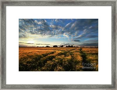 Harvest Framed Print by Franziskus Pfleghart