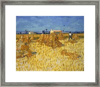 Harvest In Provence Framed Print by Vincent van Gogh