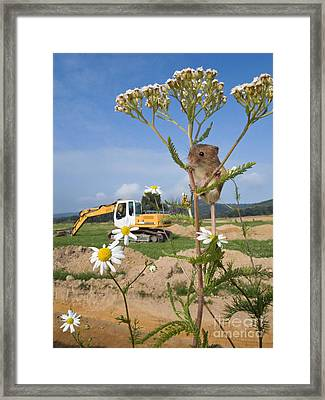Harvest Mouse And Backhoe Framed Print by Jean-Louis Klein & Marie-Luce Hubert