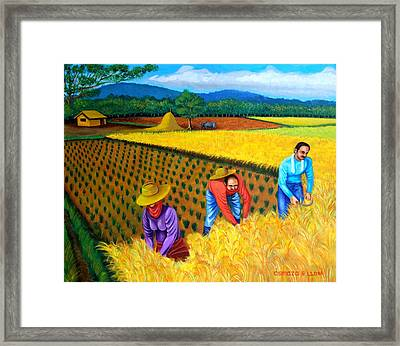 Harvest Season Framed Print by Cyril Maza