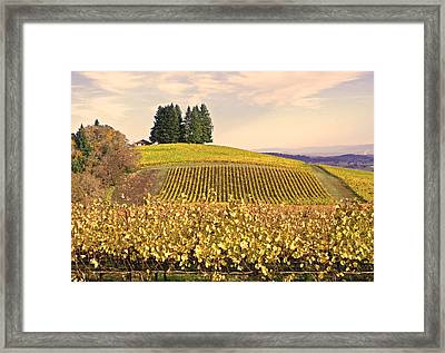 Harvest Time In A Vineyard Framed Print by Margaret Hood