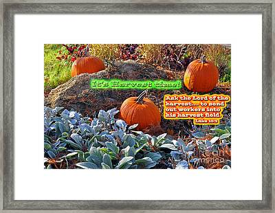 Harvest Time Framed Print by Lydia Holly