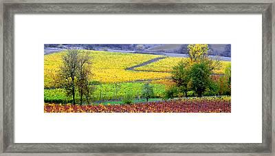Harvest Time Framed Print by Margaret Hood