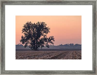 Harvest Tree Framed Print by Andrea Kappler