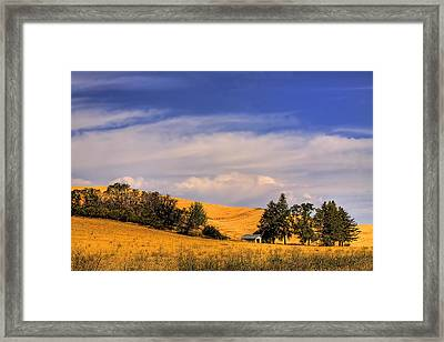 Harvested Framed Print by David Patterson