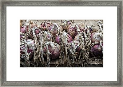 Harvested Onions Red Winter Framed Print by Tim Gainey