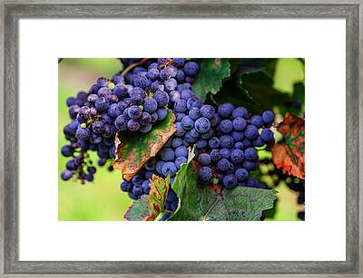 Harvesting 1 Framed Print by Jenny Rainbow