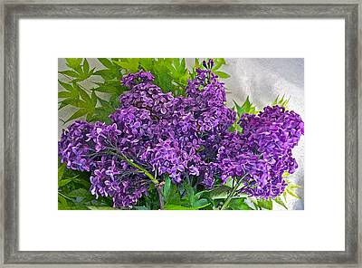 Harvesting Aroma Framed Print by Gwyn Newcombe