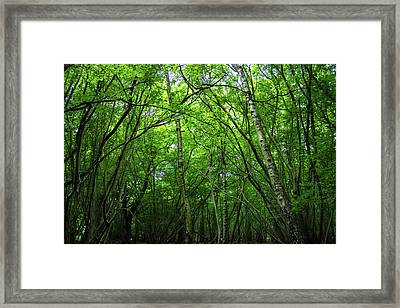 Hatfield Forest Framed Print by Martin Newman