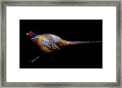 Have A Pheasant Day.. Framed Print by Martin Newman