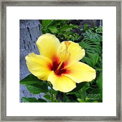 Hawaiian Hibiscus Framed Print by Sue Melvin