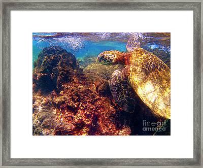 Hawaiian Sea Turtle - On The Reef Framed Print by Bette Phelan