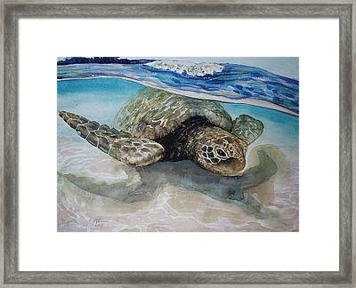Hawaiin Turtle Framed Print by Lynne Haines
