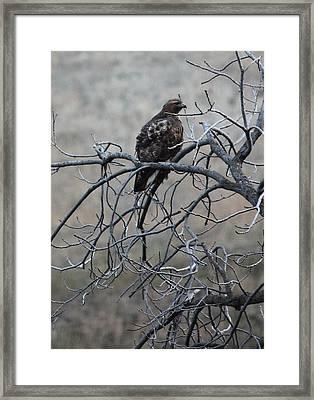 Hawks Perch 1 Framed Print by Linda Meyer