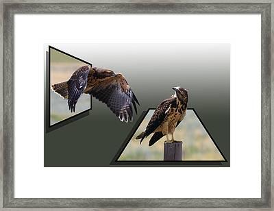 Hawks Framed Print by Shane Bechler