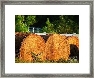Hay Bales Framed Print by Todd A Blanchard