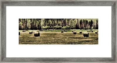 Hay Harvest Framed Print by David Patterson