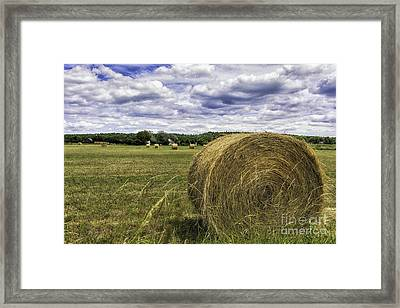 Hay Roll Framed Print by Timothy Hacker